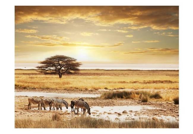 Fototapeta - Afrykańskie zebry przy wodopoju