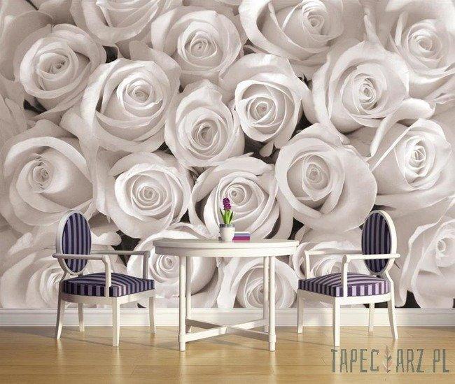 Fototapeta Biała róża 2167