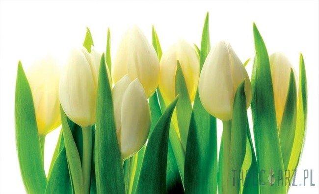 Fototapeta Białe tulipany 894