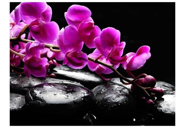 Fototapeta - Chwila relaksu : orchidea i kamienie zen