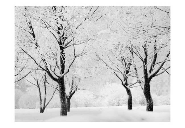 Fototapeta - Drzewa - pejzaż zimowy