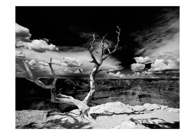 Fototapeta - Drzewo na tle Wielkiego Kanionu