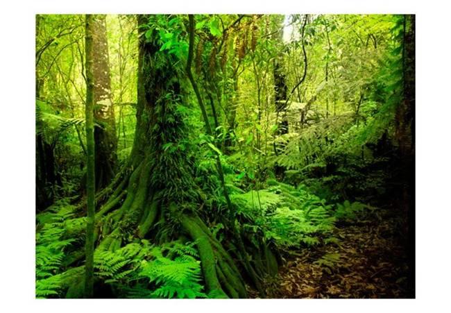 Fototapeta - Dżungla