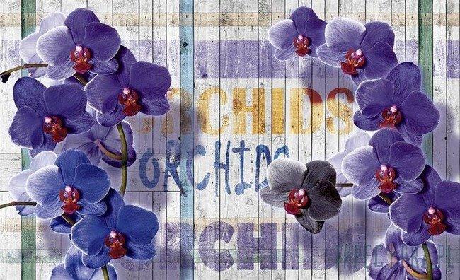 Fototapeta Fioletowa orchidea 1070