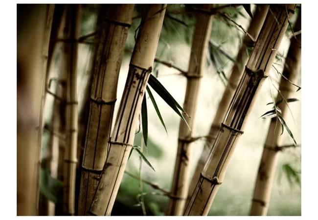 Fototapeta - Fog and bamboo forest