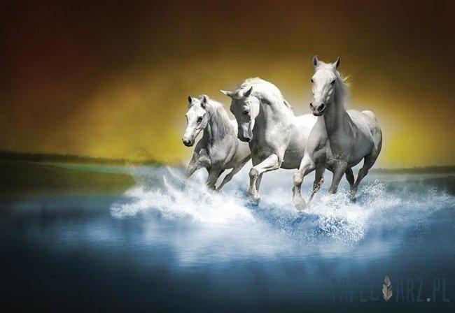 Fototapeta Galopujące konie 425