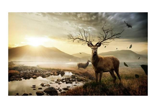 Fototapeta - Jelenie nad górskim potokiem