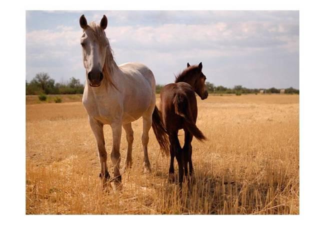 Fototapeta - Koń i źrebię