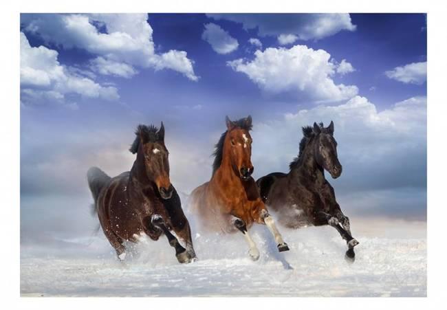 Fototapeta - Konie w śniegu