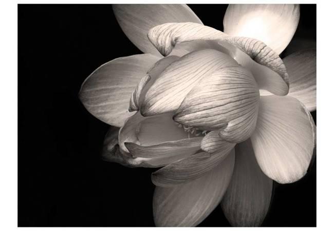 Fototapeta - Kwiat lotosu