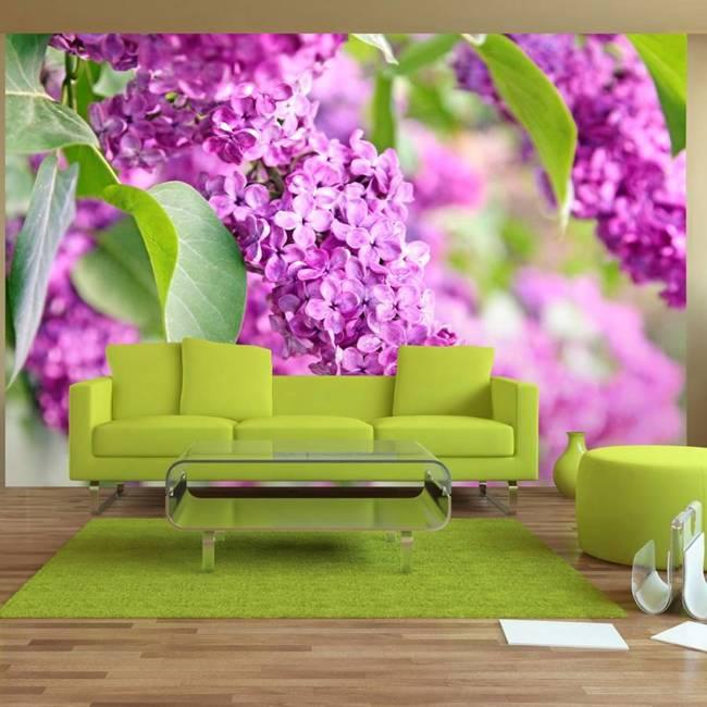Fototapeta - Kwiaty bzu
