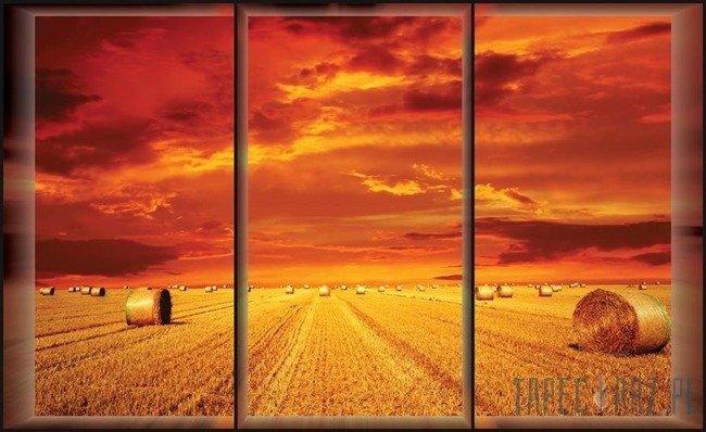 Fototapeta Okno z widokiem na pole 498
