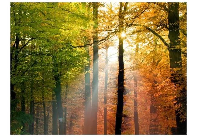 Fototapeta - Piękna jesień