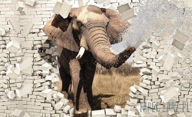 Fototapeta Słoń wychodzący z ceglanej ściany 3d 3638