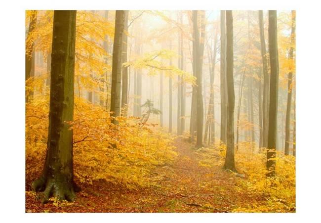 Fototapeta - las - jesień