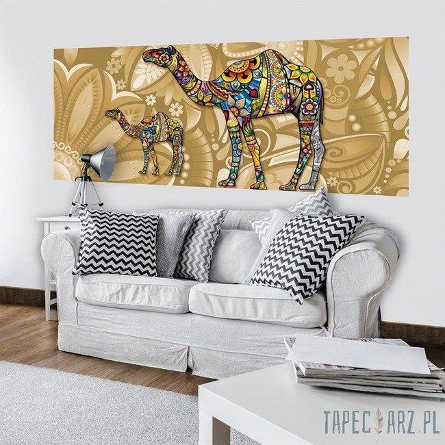 Fototapeta na flizelinie Kolorowe wielbłądy 3264VEP