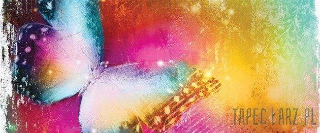Fototapeta na flizelinie Kolorowy motyl 575VEP