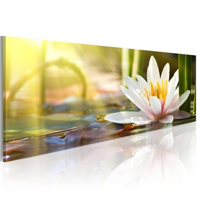 Obraz - Blask lotosu