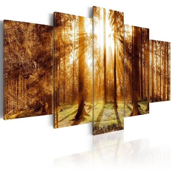 Obraz - Leśna iluminacja