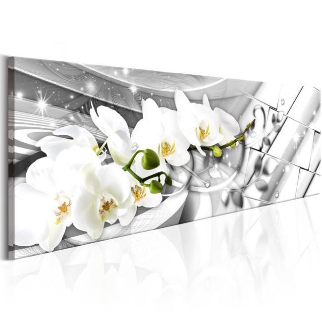 Obraz - Zakręcone orchidee