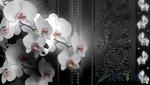 Fototapeta Gałązka storczyka w odcieniach szarości 1328